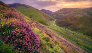 Header-clad hills near Wanlockhead