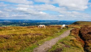 Wild ponies on the Hatterall Ridge