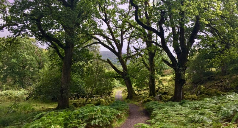 The Kerry Way from Killarney to Black Valley