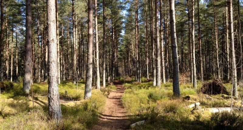 Forest path on the Loch Ness 360°
