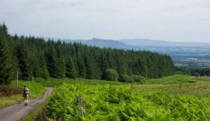 Surrounded by ferns on the Rob Roy Way
