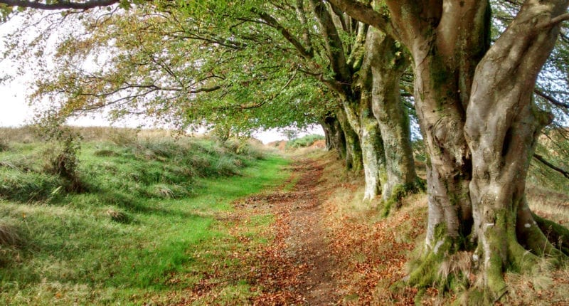 The John Muir Way