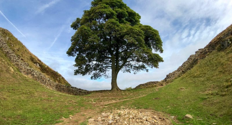 Sycamore Gap on Hadrian's Wall Path