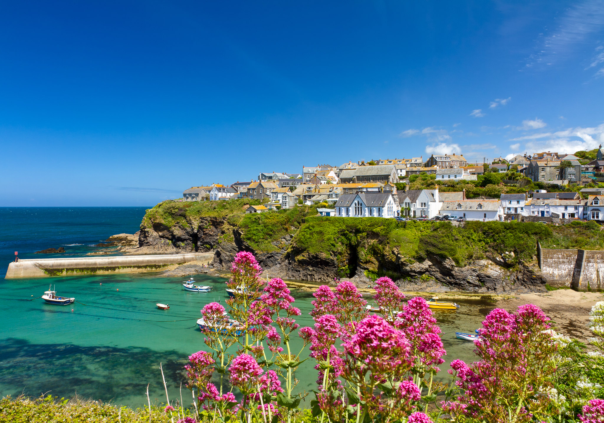 Wildflowers at Port Isaac Harbour