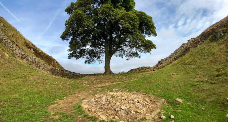 Sycamore Gap on Hadrian's Wall