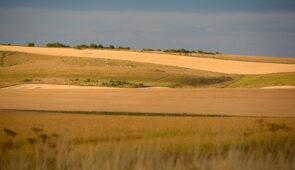 Rolling wheat fields on the Ridgeway