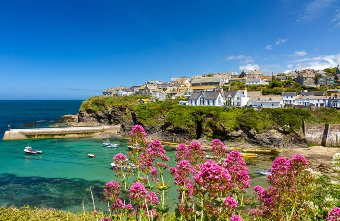 Wildflowers at Port Isaac