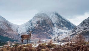 Deer in Glen Etive, Scottish Highlands