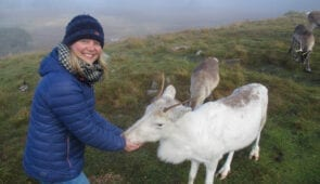 Feeding reindeer in the Cairngorms