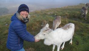 Feeding reindeer in the Cairngorms