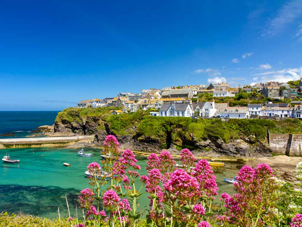 1-Wildflowers-at-Port-Isaac-Harbour-1.jpg