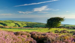 Porlock Common, Exmoor National Park