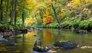 Autumn foliage on the banks of the River Teign.